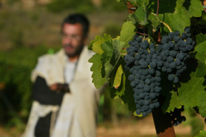 Modern Wineries Have Ancient Roots In The Holy Land