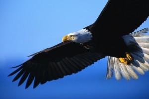 eagle-1024x682